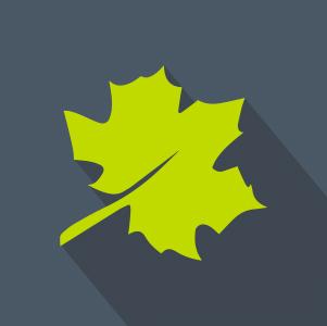 Green leaf over grey background